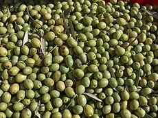Olive bosane, dalla Sardegna