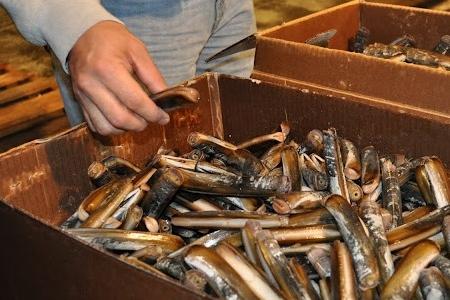 Mercato del pesce new york