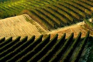 Impressionante il colpo d'occhio sulle vigne della cantina