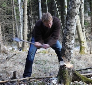 Felling a birch tree to burn