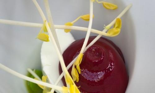Fave e issopo (pianta aromatica della famiglia delle lamiacee)
