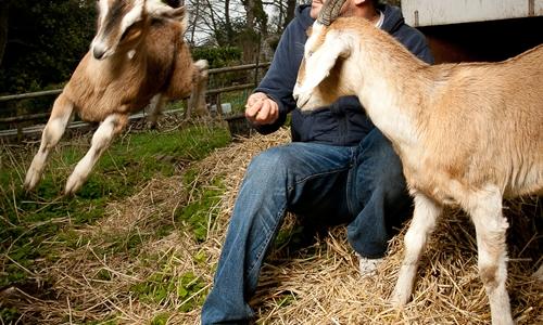 L'allevamento di capre di Cabrito Goat Meat