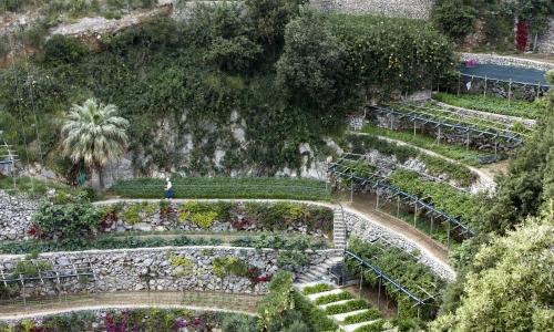 I terrazzamenti del San Pietro a Positano (Na)