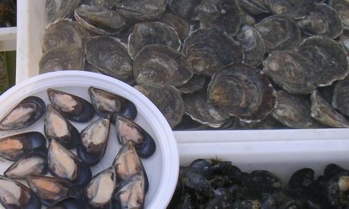 Un tris di crudi di pesce, vero patrimonio gastronomico della città
