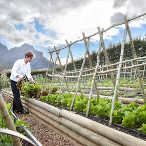 Christiaan Campbell, born and raised in Cape Town, has a very large vegetable garden, inside the estate, at his disposal