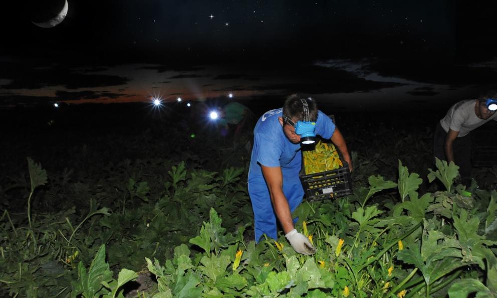 Spirito Contadino è l'azienda pugliese che coltiva le proprie verdure secondo rigorosi disciplinari, nel rispetto delle piante e del territorio e utilizzando rimedi naturali. E' anche attiva sul fronte della ricerca di nuove varietà