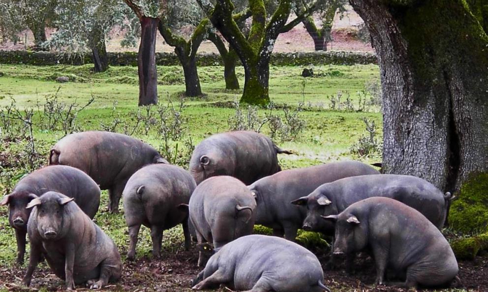 I 150 anni di Joselito: storia di eccellenti jamón, grandi chef e maiali felici