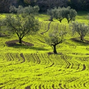 The third edition of international olive oil competition Extrascape takes place in San Martino in Pensilis, a small village in Southern Molise (photo credits extrascape.org)