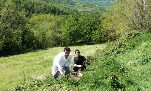 I giovani chef dello Zunica 1880 raccolgono le erbe spontanee