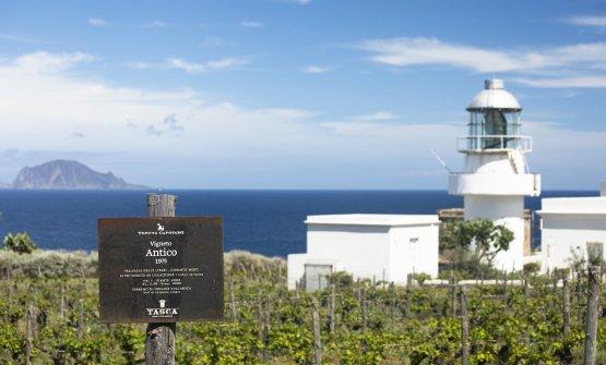Il ritorno di Capofaro: dopo un anno di pausa riapre il wine relais di Salina. E presenta molte novità