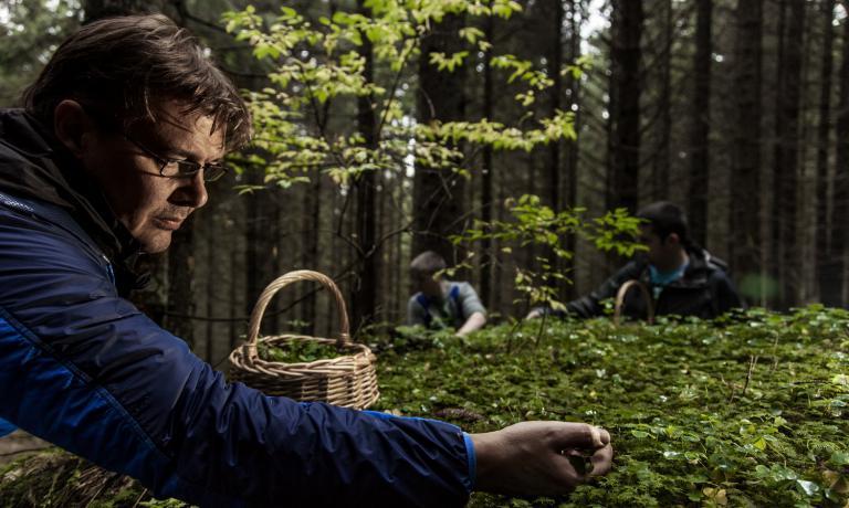 Alessandro Gilmozzi nel suo mondo di erbe