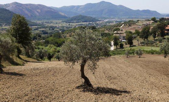 La campagna attorno a Caiazzo. FotoRaffaele Mariniello