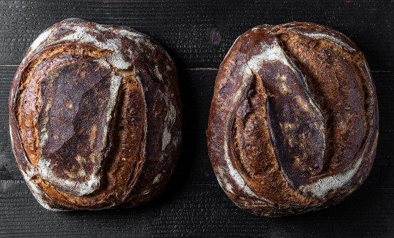 Sourdough bread con miscuglio evolutivo e miscuglio in campo di vecchie varietà di grano