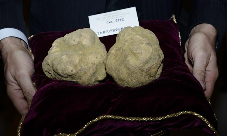 Due tartufi,100.500 euro