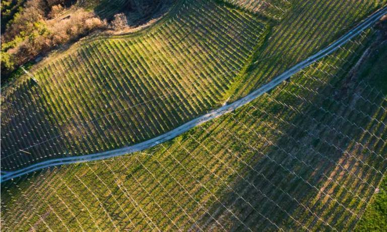 Una splendida vista dall'alto di una delle vigne Kettmeir