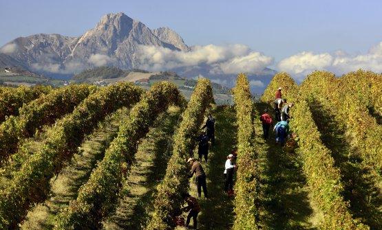 I bellissimi paesaggi d'Abruzzo, tra vigneti e