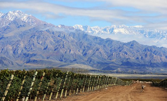 The vineyards of Zuccardi - Valle de Uco, in the