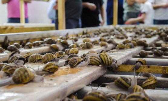 Né carne, né pesce: la riscossa delle lumache (di Sicilia)