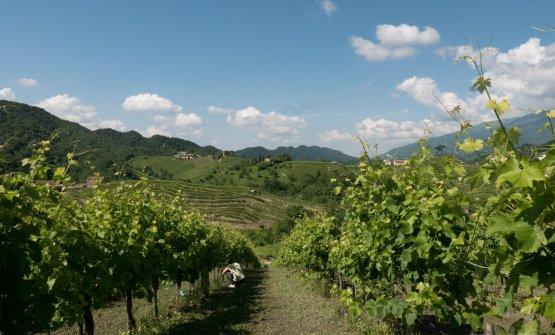 L'attuale situazione delle vigne
