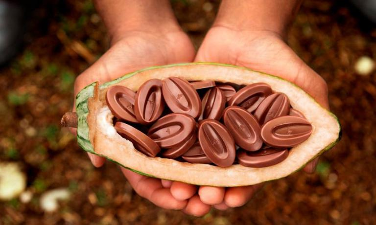 «Un cioccolato di alta qualità si può fare solo