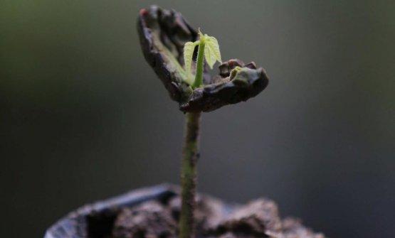 """""""Il rispetto dell'ambiente è da sempre per noi un principio irrinunciabile, uno dei quattro pilastri del nostro programma di RSI Live Long. Come Valrhona, ci impegnano ogni giorno per ridurre gli impatti ambientali in tutte le fasi della filiera del cacao, dalla produzione alla distribuzione. Ma è insieme che faremo la differenza"""""""