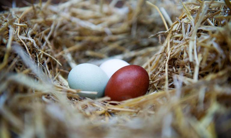 """Le """"uova di Silvio"""""""