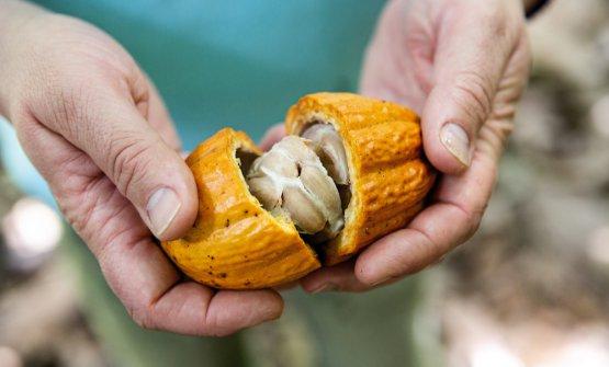 """Lacabossa del cacao """"speciale"""""""