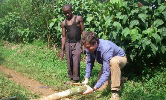 Il chinino,l'ingrediente chiave dell'acqua tonica, arriva dalla Repubblica democratica del Congo (Fever Tree è il nome colloquiale dell'albero di Chinchona)