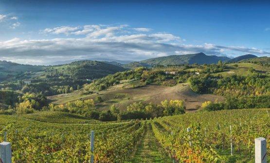 Uno splendido paesaggio vitivinicolo delle Marche