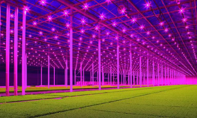 I colori sono autentici: si tratta della super-tecnologica serra diKoppert Cress, gigante olandese dei micro-vegetali. E' la nuova frontiera delle coltivazioni indoor per l'alta cucina e non solo. Secondo i dirigenti dell'azienda, è questo il futuro dell'agricoltura