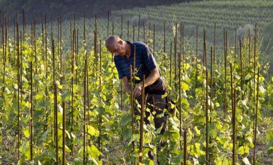 Josko Gravner: l'emergenza serva per ripensare l'agricoltura