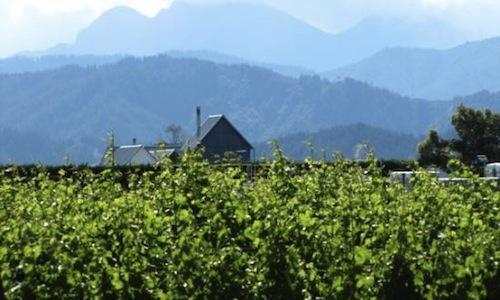 La tenuta vitivinicola di Cloudy Bay a Marlborough, regione localizzata nell'area nord-est dell'isola più meridionale della Nuova Zelanda. Il loro Sauvignon Blanc è una delle massime espressioni vitivinicole del paese, simbolo dell'adattabilità ad altri terreni di un vitigno non autoctono (foto tripadvisor)