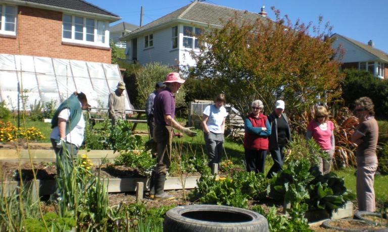 Membri del Dunedin Veges Growers' Club di Otago in Nuova Zelanda, alle prese con la coltivazione di un orto sinergico: si scambiano consigli sui metodi di coltivazione, tempi, tecniche e spesso anche il raccolto stesso