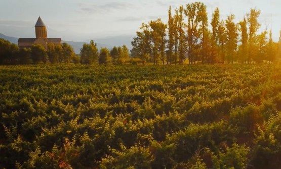 Vigne di Rkatsiteli attorno al monastero ortodosso di Alaverdi. I monaci producono vinodal 1011, oltre un millennio fa