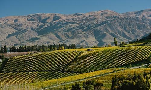 Una panoramica scenografica del Burn Cottage, produttore riservatissimo di vini concentrati del Central Otago, in Nuova Zelanda