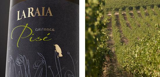 Pisè, il Gavi ricavato da vigne di oltre 70 anni