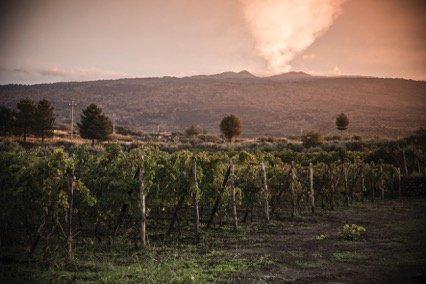 Tenuta Tascante a Passopisciaro, Etna (foto Pietro Leone)