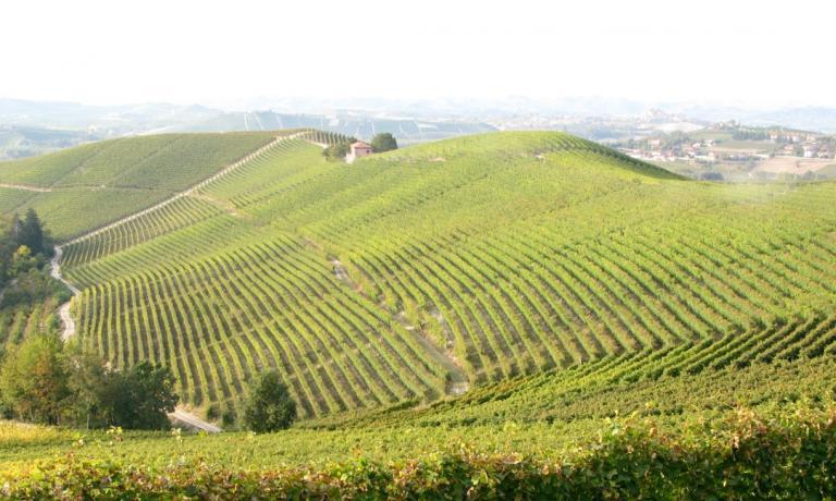 Fontanafredda � un vero pezzo di storia della cultura vitivinicola del nostro paese: nella splendida tenuta di Serralunga d'Alba si produce vino di eccellenza da oltre 135 anni. Oggi ospita anche un piccolo hotel di charme con 11 camere e il ristorante stellato Guido, dello chef Ugo Alciati