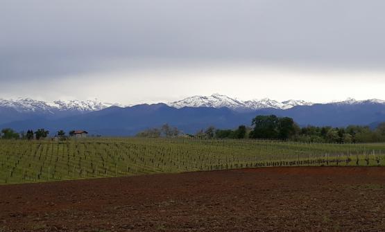 Le vigne di Ghemme (Novara), nell'Alto Piemonte, ai piedi del Monte Rossa. 3.500 abitanti, dal 1994 parte delle Città del vino