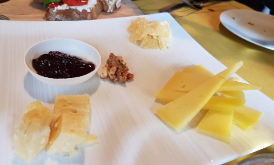 A tasting of Tolminc cheese in different periods of maturation