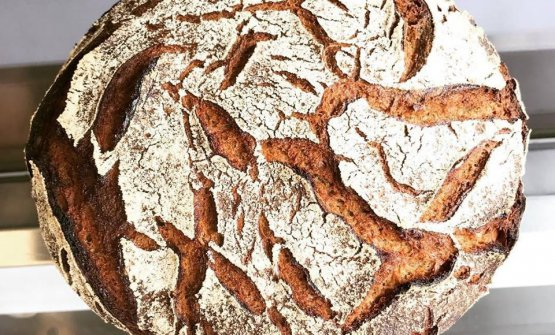 100% rye bread from Alain Locatelli
