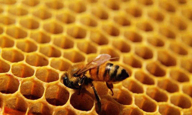 La prima tappa,il 21 giugno scorso, è stata dedicata al miele,la sua produzione biologica e le sue qualità nutrizionali.All'incontro erano presenti Lucio Cavazzoni, presidente di Alce Nero, Diego Pagani, apicoltore e presidente di Conapi e Franco Berrino, medico epidemiologo.