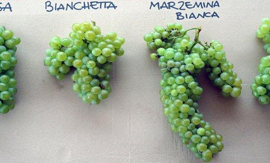 Le uve storiche della zona