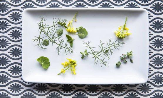 Alcune erbe dall'orto del Capofaro:nasturzio, finocchio selvatico, origano, maggiorana, mizuna rossa, ravanello