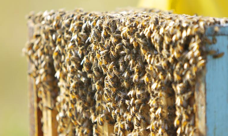 Da La Raia proviene anche dell'ottimo miele biologico