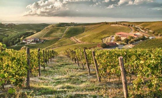 Le vigne della Tenuta