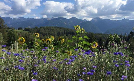Erbe, fiori, montagna: sono gli ingredienti princi