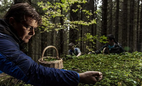 Alessandro Gilmozzi foraging in the woods