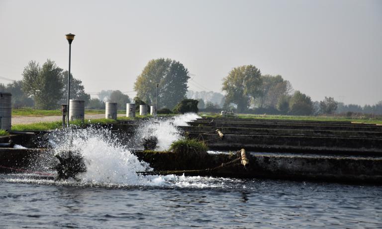 Le grandi vasche a Calvisano