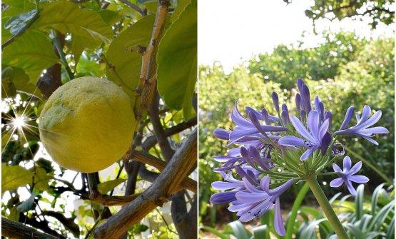 Jardines del Mirazur, cinque giardini - i cinque cuori pulsanti dell'Universo Mirazur - dove si coltivano oltre 300 varietà di piante, secondo gli insegnamenti della biodinamica e della permacultura
